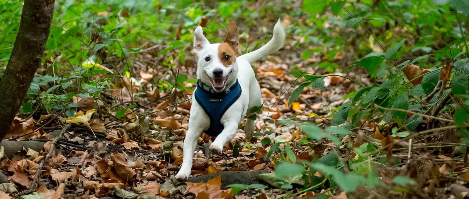 Canine Pawtonomy