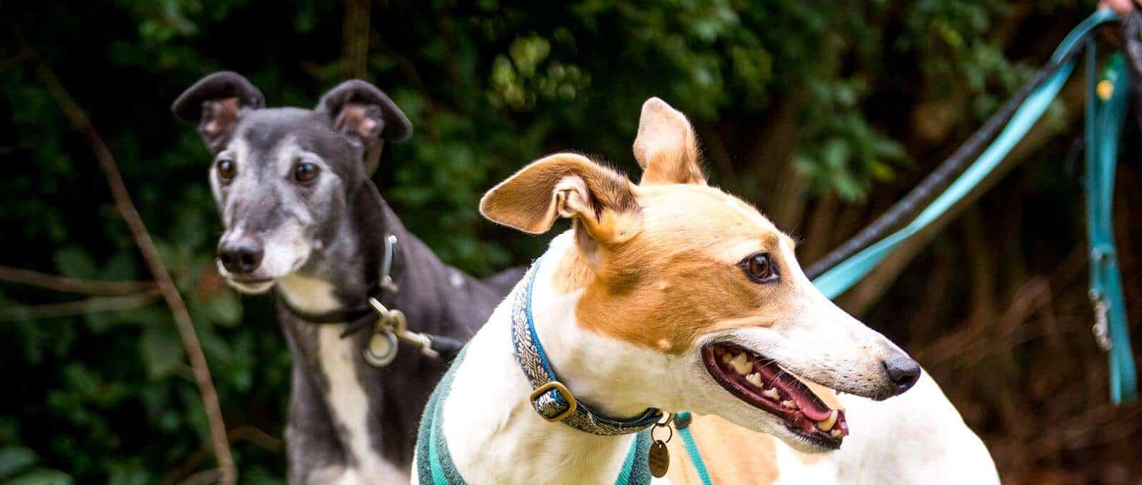 Canine Pawtonomy: What We Do