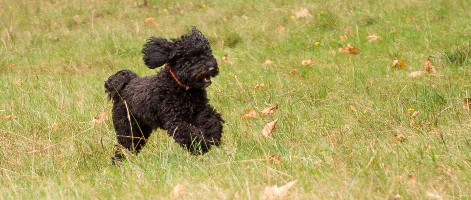 Canine Pawtonomy: Geeks' Corner