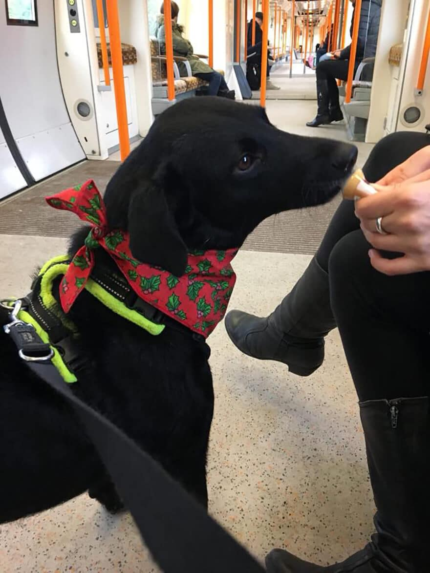 Betty on a London Underground train