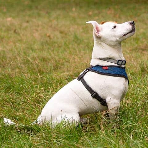 Canine Pawtonomy: Services & Rates